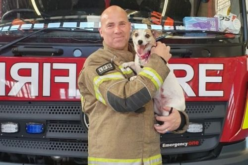 Firefighter fosters dog he found 'lifeless' under bed during raging fire