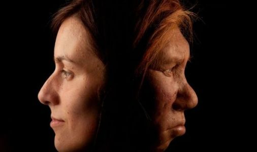 Neanderthals had ability to produce and perceive human speech - study