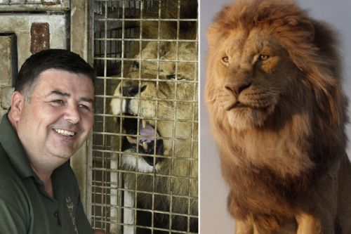 Lion King? Blair Drummond expert insists it's female lions who rule pride