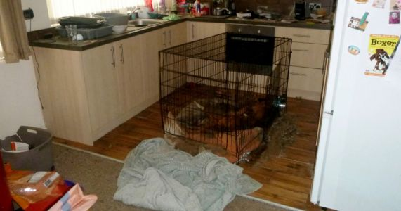 Man left dogs to starve to death in crate within metres of full bags of food