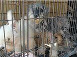 Chinese 'pet' market sells live animals for their meat amid coronavirus pandemic