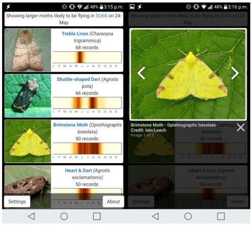 New app makes identifying moths easier