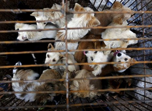 Chinese city bans eating dogs and cats after coronavirus outbreak