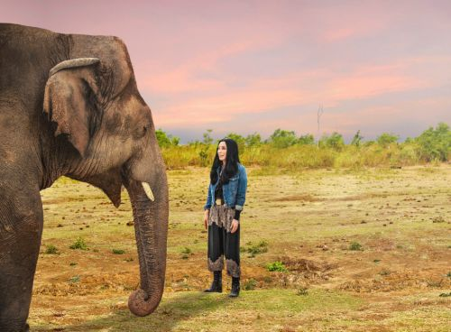 Cher explains how powerful social media campaign inspired her to help save 'world's loneliest elephant'