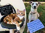 Owners 'shame' their naughty pets after catching them misbehaving