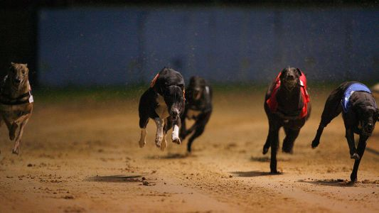Timeform Greyhound SmartPlays: Monday 16 December