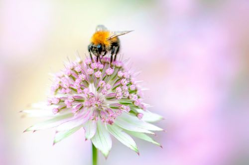 How to protect bees in your garden or balcony in nine easy steps