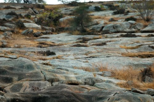 Can you spot the leopard hiding in the rocks and the other animals doing their best to blend in?