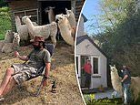 Pembrokeshire llama farm sends animals to deliver food packages to vulnerable people self-isolating