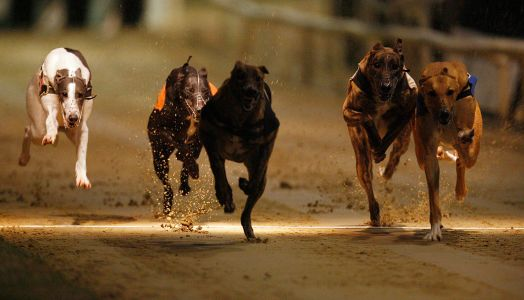 Timeform Greyhound SmartPlays: Sunday 23 September