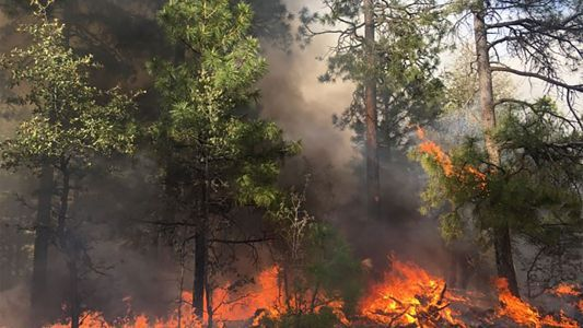 Coronavirus is coming for wildland firefighters. They're not ready