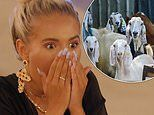 Love Island contestants are shocked when a herd of angry GOATS invade the villa