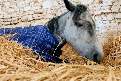 Heartbreaking moment pony died in front of rescuers after being beaten by teens