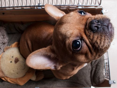 As humans head back to work, pets may experience separation anxiety. Here's how pet owners can manage the transition