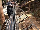 Shocking video shows tourists feeding caged tigers with FISHING POLES at a Chinese zoo