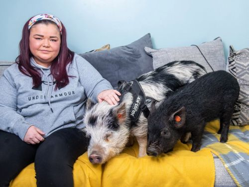 Woman shares bed with pampered micro-pigs and feeds them avocados and popcorn