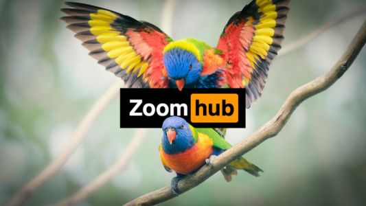 Zoombomber crashes court hearing on Twitter hack with Pornhub video