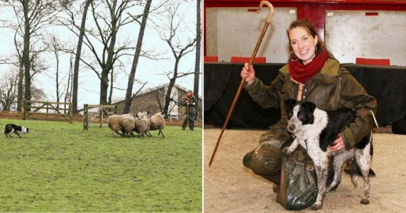 World's most expensive sheepdog sells for £18,900 at auction
