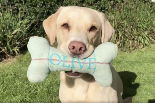Scots commentator Andrew Cotter's hilarious voice-over on dog's toy theft