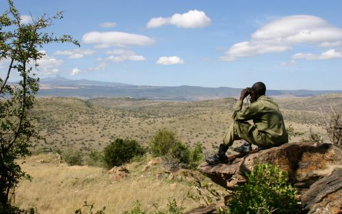 The outlook is bleak for the guardians of Africa's wildlife - here's how you can help