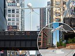 Life-size military DRONE will hang over a busy Midtown Manhattan road