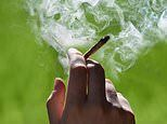 Cannabis laws up in smoke: Campaigners fear drug is being unofficially legalised