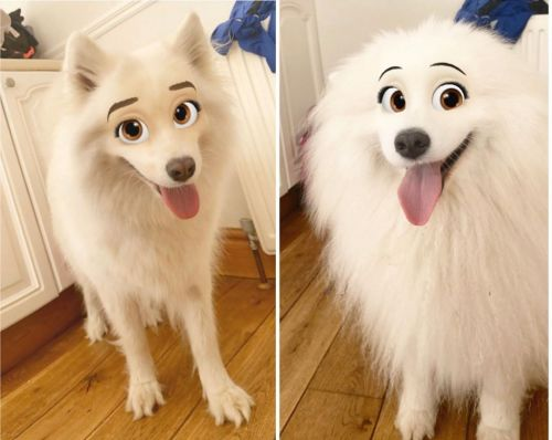 Dog owners turn their pets into Disney characters with new Snapchat filter