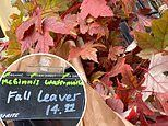 A San Francisco grocery store is selling bouquets of dead fall LEAVES for $15 a bunch