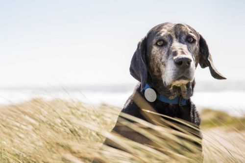 Incredible high-tech gadgets for your pets
