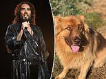 Russell Brand sparks outrage after saying 'working class men' used 'surprisingly poetic language'