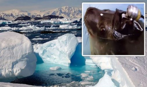 Antarctica shock: How camera attached to seal exposed 'mysteries under ice'