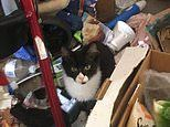 Inside the feral home where woman 'hoarded' five cats and 20 rats littered with faeces and rubbish