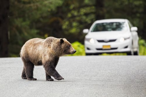 Who has the best cheap car insurance in Alaska?