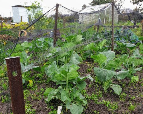 Keeping the Plot: A journal of growing and cooking Scottish produce - The September Harvest
