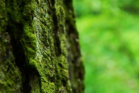 Forestry Commission joins The Natural History Consortium as the newest member of the partnership