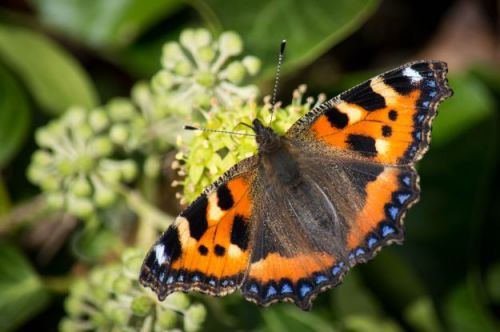 Top plants for pollinators in your wildlife garden