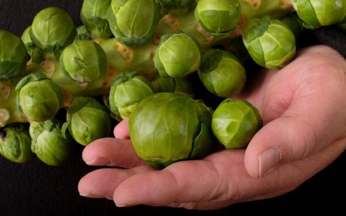 Brown cauliflowers and wonky sprouts on the menu after flooding decimated Christmas vegetable crops