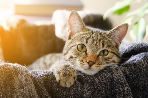 First Confirmed Coronavirus Case In A UK Pet - As Cat Contracts Virus