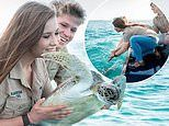 Bindi and Robert Irwin release a sea turtle into the wild after it was treated at Australia Zoo