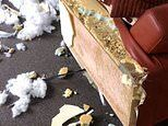 Australian pet owner returns home to find his dog has ripped his new £2,800 sofa to shreds