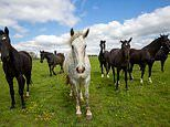 200 horses from the Queen's Household Cavalry swap London for Leicestershire during lockdown