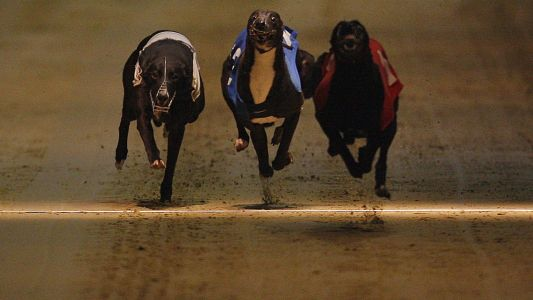 Timeform Greyhound SmartPlays: Saturday 22 September