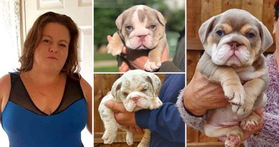 Family 'blinded' as puppy thieves spray noxious substance in their faces during raid
