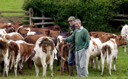 Prince Charles's cows among thousands of animals affected by outbreak of bovine tuberculosis, vets say