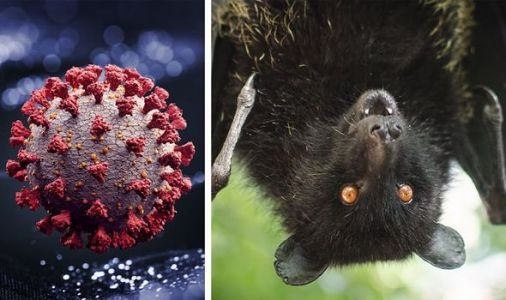 Coronavirus in animals: Highly likely bats DID start the coronavirus pandemic - expert