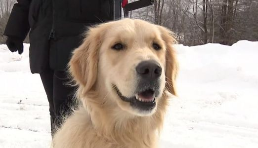Golden retriever pup who went missing months ago is reunited with her family