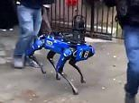 NYPD uses its $75,000 Digidog to assist with an arrest in a Manhattan apartment