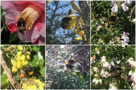 Pollinators in Winter: Go native or not?