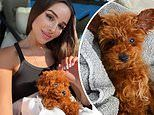 Olivia Culpo posts cute snaps of new fluffy pup Oliver Sprinkles to Instagram