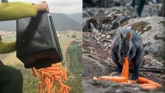 Thousands Of Kilograms Of Vegetables Dropped Over New South Wales To Feed Fire-Stricken Australian Wallabies